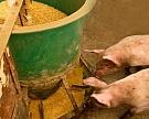 Из-за АЧС страны-импортеры могут запретить поставки зерна изРоссии
