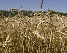 Вянваре-феврале Россия экспортировала 2 млн тпшеницы