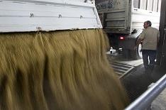 Торги зерном из госфонда возобновятся 23октября