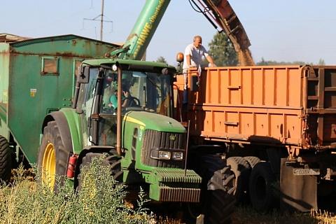 Закупочные цены на пшеницу в июле выросли на 12%