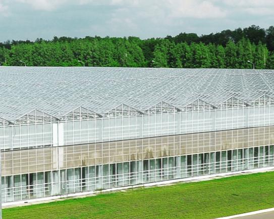 Крупнейший производитель тепличных овощей Липецкой области вложит 6 млрд рублей врасширение производства