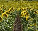 «Эфко» и«Солнечные продукты» объявили об«альянсе брендов»