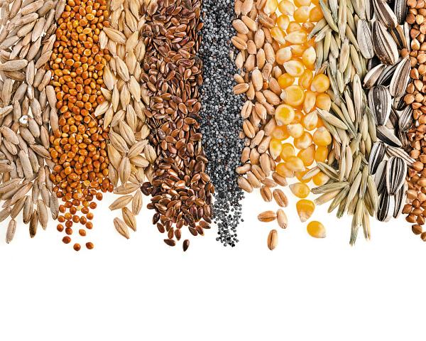 Как вРоссии решается проблема нехватки отечественных семян