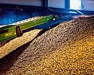 Картофельная история: селекция отечественного семенного материала может получить серьезное развитие