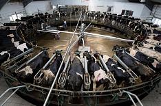 «ЭкоНива» намерена инвестировать в органическое молоко