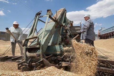 Цены на пшеницу продолжают снижаться