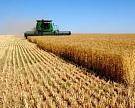 «Разгуляй» начал сбор урожая