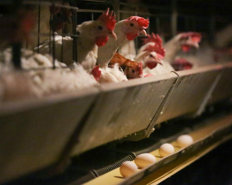 К2035 году потребление яйца вмире вырастет в1,5 раза