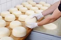 Адыгейский сыр может исчезнуть сполок