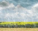Аномальные осадки снизили качество зерна и повысили сборы с гектара