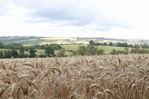 Минсельхоз США не стал менять прогноз урожая пшеницы и подсолнечника для России