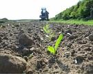 Посевы сахарной свеклы могут превысить 1,1 млн га