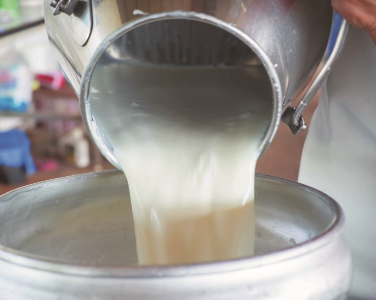 «Лишнее» молоко. Весь прирост производства сырья ушел в запасы
