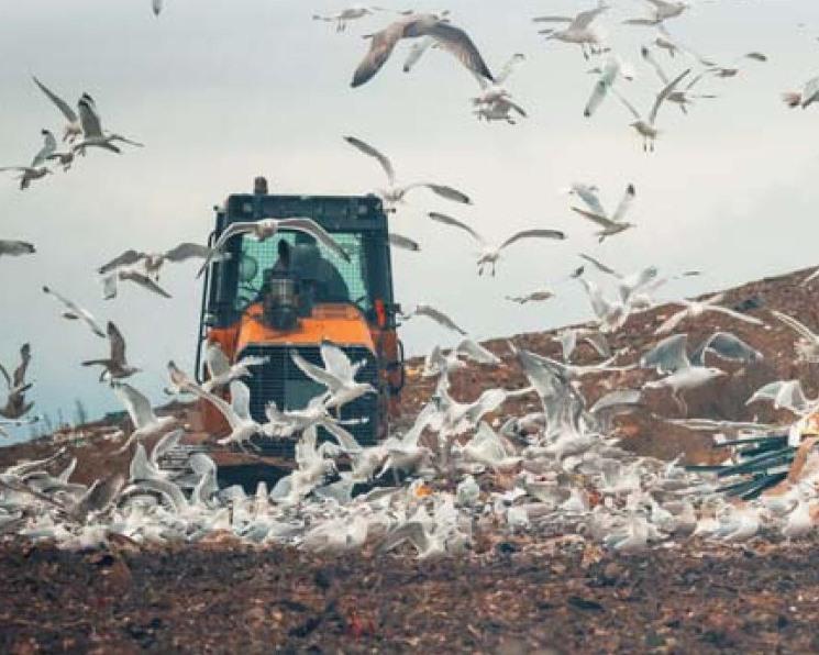 Долг перед почвой. Потери продовольствия вносят свой вклад в ухудшение плодородия почв