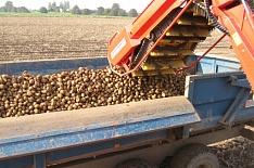 Миллиардер Глеб Фетисов купил картофельное хозяйство-банкрот