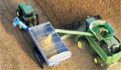 Сколько соберем зерна?