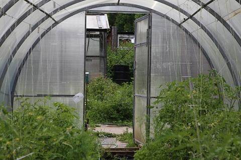 Урожай тепличных овощей может сократиться