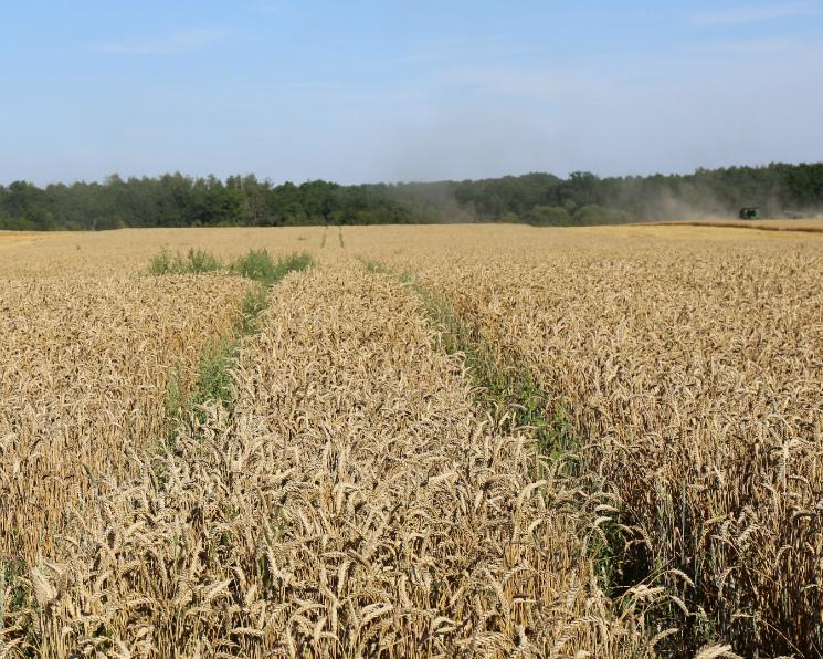 Земельный банк агрохолдинга Владимира Евтушенкова вырос до380 тысяч гектаров
