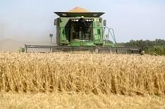Сибирь демонстрирует рекордную урожайность пшеницы