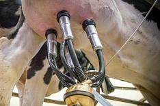 «Агрокомплекс» увеличил производство молока на 21%