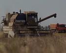В России собрано уже 105,5 млн тонн зерна