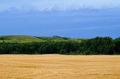 Качество пшеницы приблизилось к прошлогоднему уровню