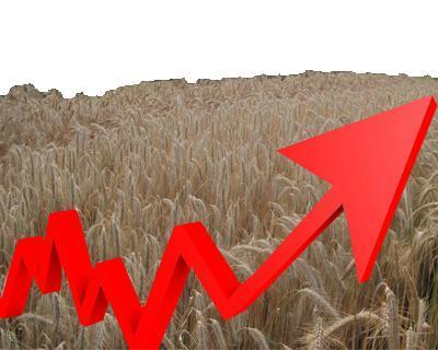 Посевные площади «Черкизово» увеличились на48%