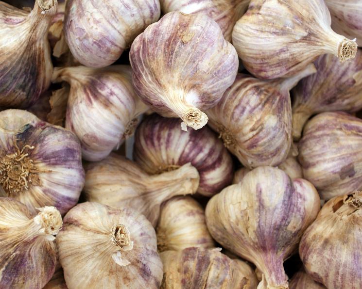 «АФГ Националь» начал выращивать чеснок