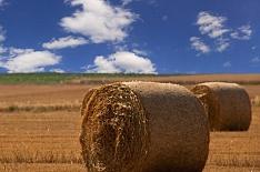 «Мираторг» возглавил рейтинг агрохолдингов повыручке