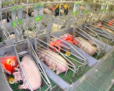 В Орловской области заселяется свинокомплекс «Черкизово»