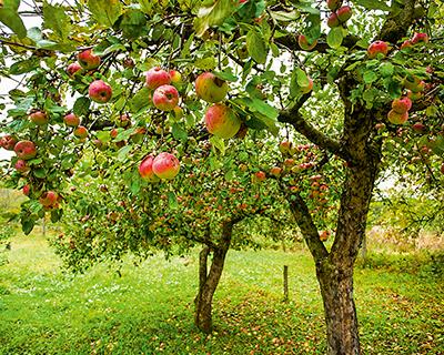 Садовая анархия: отечественное садоводство под вопросом