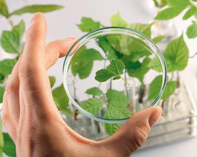 ВЕС создадут базу для селекционеров с учетом изменения окружающей среды