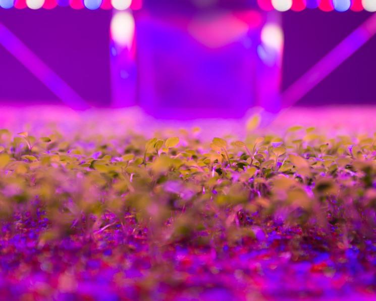 Зелень вырастят на столичной ферме. Инвестиции в новый формат тепличного производства составят 5 млрд рублей