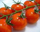 Выведены томаты сусиленным вкусом