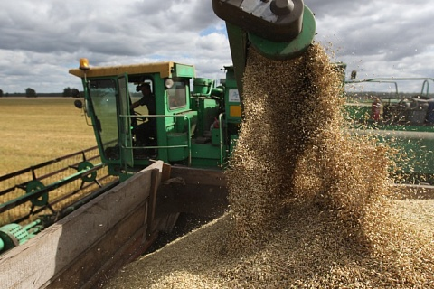 Намолот зерна сравнялся с прошлогодним объемом