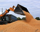 Сбор зерна достиг 62,5 млн тонн