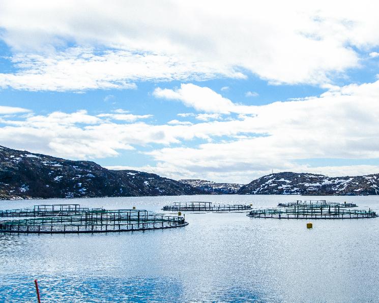 Производство продукции аквакультуры выросло на 7%