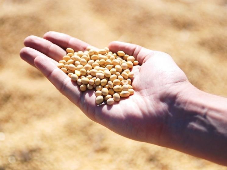 «Черкизово» вложит 7,2 млрд рублей в переработку сои