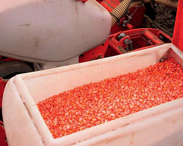 «ИрАгро» укрепит свои позиции на отечественном рынке гибридных семян кукурузы