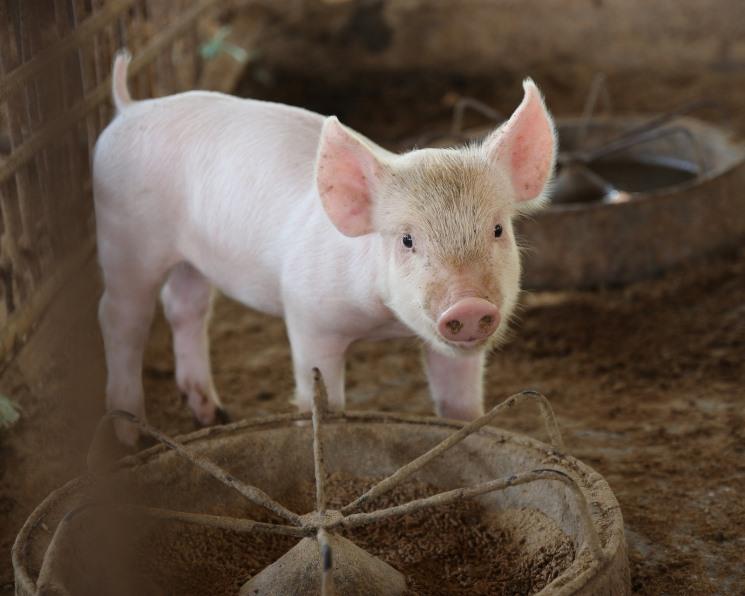 Экспорт мяса не спасет падающую маржу