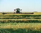 Идет активный сбор зерна, зернобобовых и озимого рапса