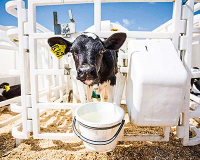 «Русмолко» открывает центр по воспроизводству стада
