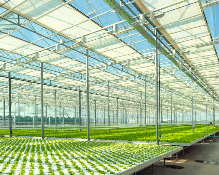 «Чурилово» осенью запустит тепличный комбинат мощностью 10 тыс. т овощей в год