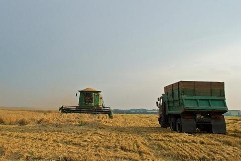 IGC: мировые запасы пшеницы обновят рекорд в сезоне-2019/20