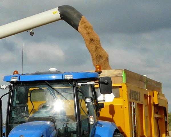 Закупочные цены зерна врамках интервенций изменяться небудут— Минсельхоз