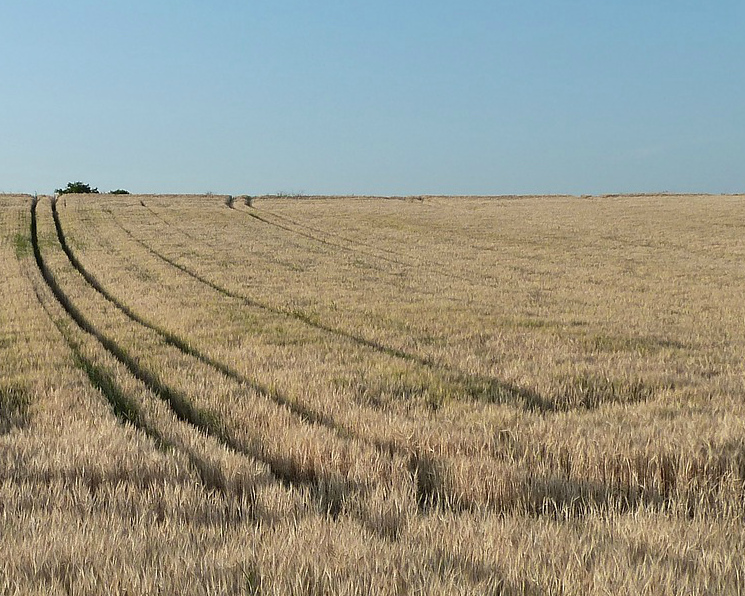 Минсельхоз США повысил прогноз урожая иэкспорта российской пшеницы