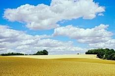 Российская пшеница за неделю резко подорожала