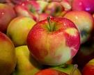 Российский рынок яблок вырастет до 3 млн тонн к 2020 году