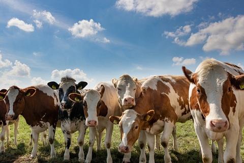 «ЭкоНива» построит животноводческий комплекс за 3,3 млрд рублей