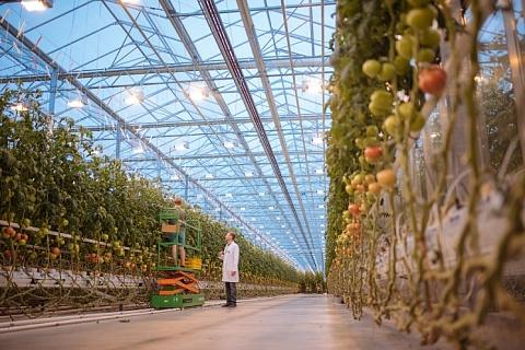 «Агро-Инвест» увеличит производство тепличных овощей